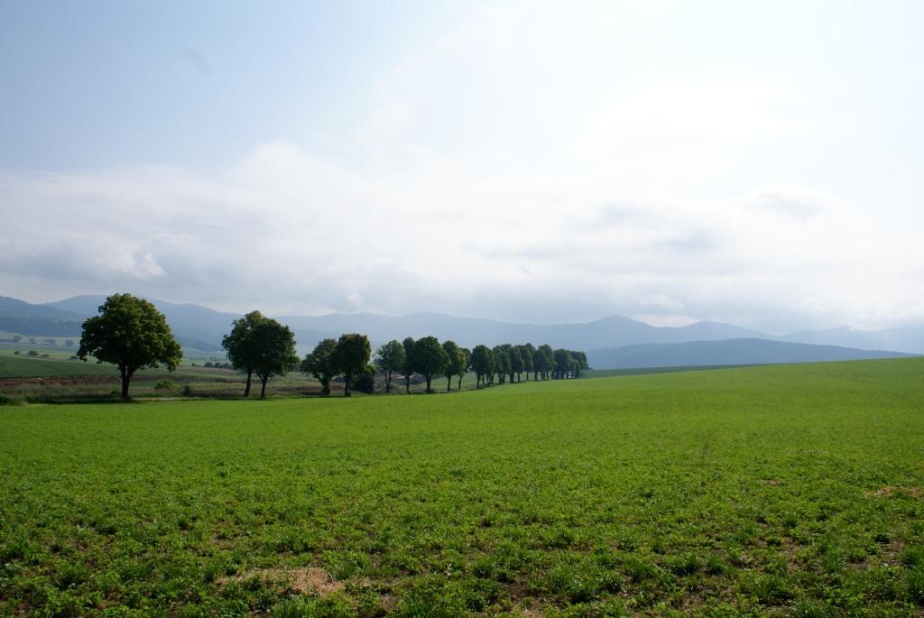 Slovakian Field
